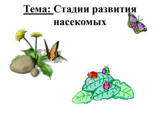 Тема:  Стадии развития насекомых