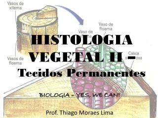 HISTOLOGIA VEGETAL II –  Tecidos Permanentes