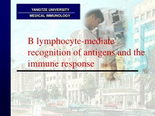 B lymphocyte-mediate recognition of antigens and the immune response