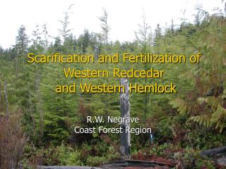 Scarification and Fertilization  of Western Redcedar  and Western Hemlock