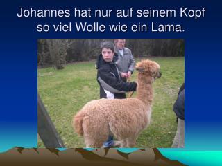 Johannes hat nur auf seinem Kopf so viel Wolle wie ein Lama.