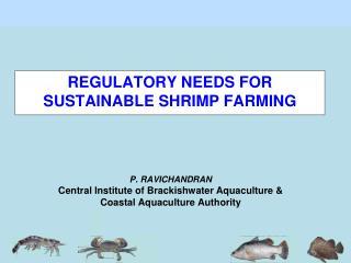 P. RAVICHANDRAN Central Institute of Brackishwater Aquaculture & Coastal Aquaculture Authority