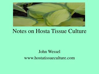 Notes on Hosta Tissue Culture