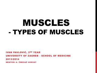 Muscles - Types of muscles