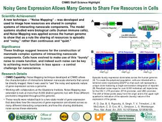 Noisy Gene Expression Allows Many Genes to Share Few Resources in Cells