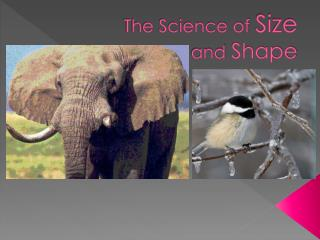 The Science of  Size and  Shape
