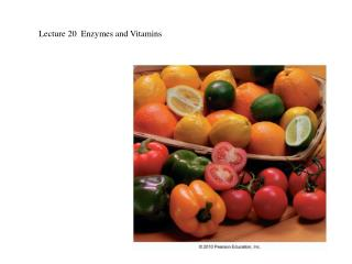 Lecture 20  Enzymes and Vitamins