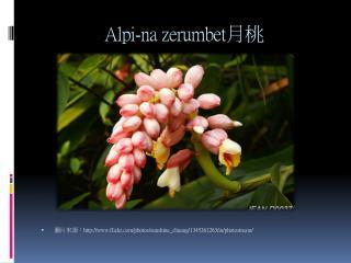 Alpi-na zerumbet 月桃