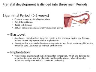 Prenatal development is divided into three main Periods  1) germinal Period  (0-2 weeks)