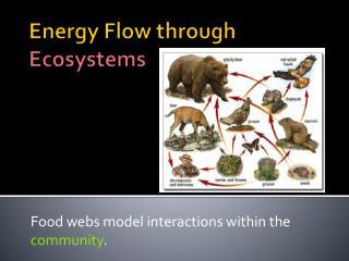 Energy Flow through  Ecosystems