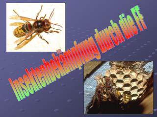Insektenbek�mpfung durch die FF