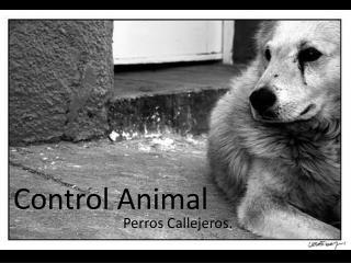 Control Animal