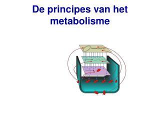 De principes van het metabolisme