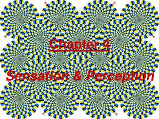 Chapter 4 Sensation & Perception