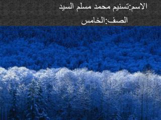 الاسم: تسنيم  محمد مسلم السيد