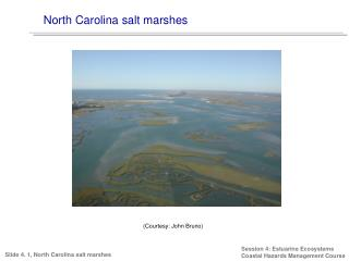 North Carolina salt marshes