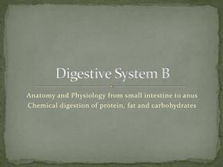 Digestive System B