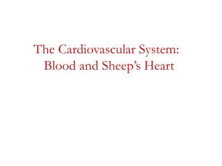 The Cardiovascular System:          Blood and Sheep's Heart