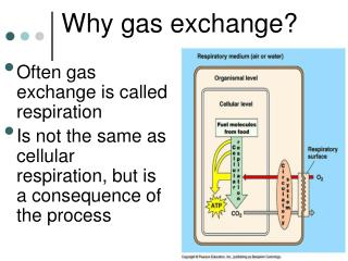 Why gas exchange?