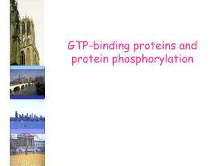 GTP-binding proteins and   protein phosphorylation