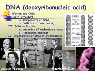 DNA  (deoxyribonucleic acid)