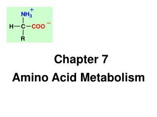 Chapter 7  Amino Acid Metabolism