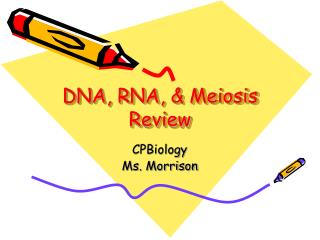 DNA, RNA, & Meiosis Review