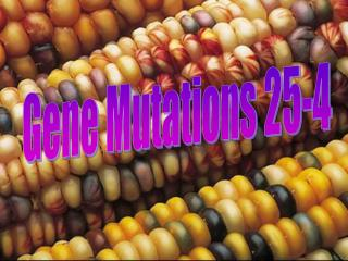 Gene Mutations 25-4
