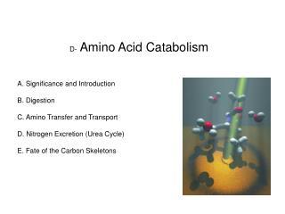 D-  Amino Acid Catabolism