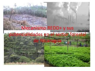 Mecanismo REDD+ y sus potencialidades en el sector forestal de Nicaragua