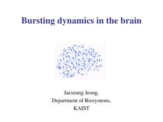 Bursting dynamics in the brain