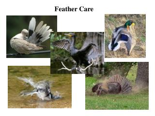 Feather Care