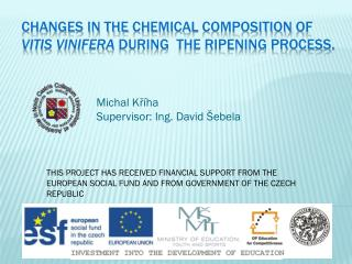 Changes in the chemical  composition  of Vitis vinifera during  the ripening process.