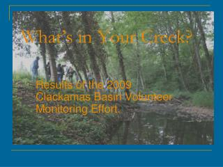 What's in Your Creek?