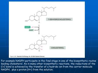 For example NADPH participate in the final stage in one of the biosynthetic routes