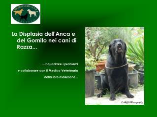 La Displasia dell'Anca e del Gomito nei cani di Razza... ..quadrare i problemi