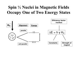Spin ½ Nuclei in Magnetic Fields Occupy One of Two Energy States