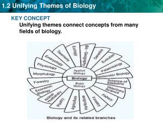 KEY CONCEPT Unifying themes connect concepts from many fields of biology.