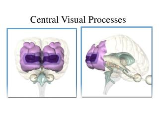 Central Visual Processes