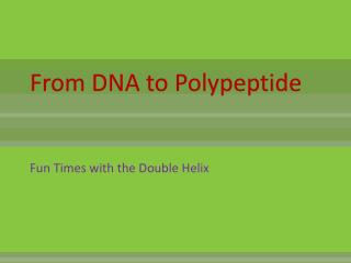 From DNA to Polypeptide