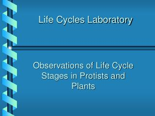 Life Cycles Laboratory