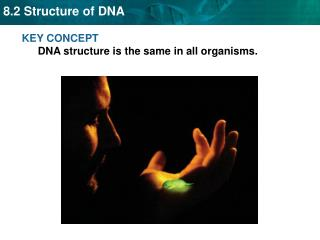 KEY  CONCEPT  DNA  structure is the same in all organisms.