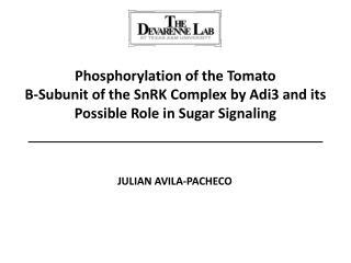 Phosphorylation of the Tomato