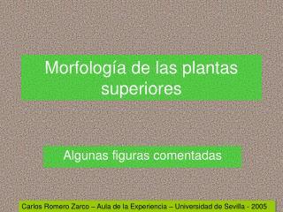 Morfolog a de las plantas superiores