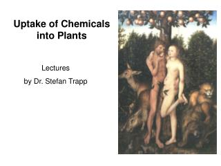 Uptake of Chemicals into Plants