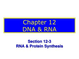Chapter 12 DNA & RNA