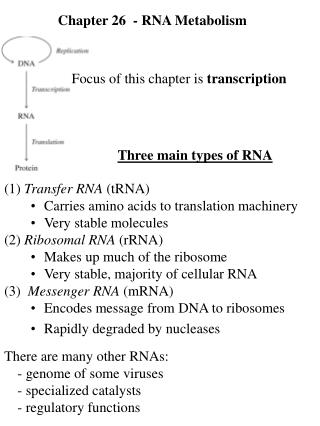Chapter 26  - RNA Metabolism