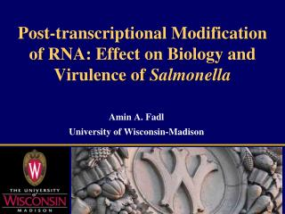 Post-transcriptional Modification of RNA: Effect on Biology and Virulence of  Salmonella