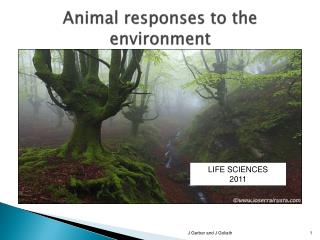 Animal responses to the environment