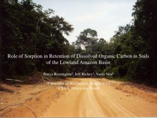 Role of Sorption in Retention of Dissolved Organic Carbon in Soils of the Lowland Amazon Basin